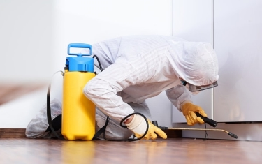 Pest-Control-Services-in-Toronto